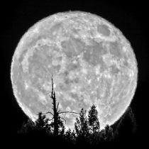 """Taken by a close friend and colleague, this shot of the """"Super Moon"""" is incredible! Thank you for letting me share this amazing stunner!"""